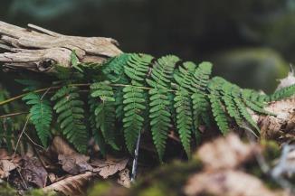Fern, Beltane, Spring, Summer, Nature